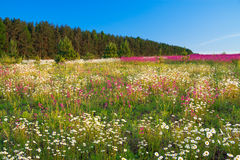 Spring  landscape with  flowers on a meadow and  sunset Stock Photos