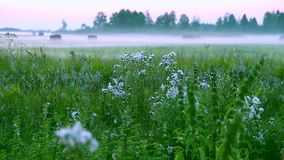 Spring landscape with fog. Foggy countryside - fog crawls across the land, over meadows, woods and grass. Summer morning. Evening rural scene white fog stock video
