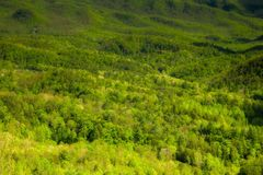Spring Landscape, Foothills Parkway Stock Photos
