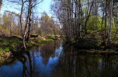 Spring landscape in the forest river. Spring landscape on the river with birch forest Royalty Free Stock Photo
