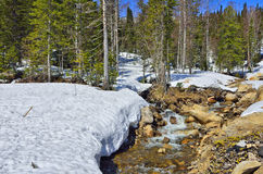 Spring landscape in the forest with snow and first flowers Stock Photos