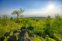Spring landscape with fresh green forest Stock Photography