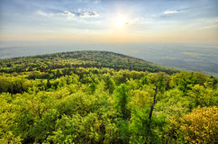 Spring landscape with fresh green forest Royalty Free Stock Photo