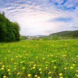 Spring landscape, fresh green meadows Stock Photography