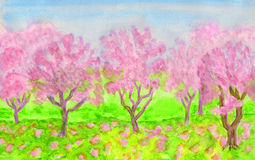 Pink spring garden, watercolours. Spring landscape, garden with trees in blossom of pink colour, hand painted picture, watercolours Stock Image