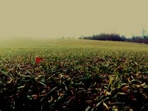 Spring landscape. Grass on landscape Royalty Free Stock Photo