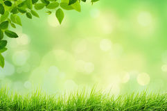 Spring landscape with grass and bokeh lights Stock Image