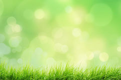 Spring landscape with grass and bokeh lights Royalty Free Stock Photos
