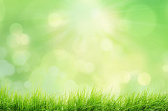 Spring landscape with grass and bokeh lights Royalty Free Stock Photo