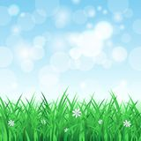Spring landscape with grass and sky Royalty Free Stock Photo