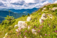 Spring landscape with grassy meadows and mountains stock photography