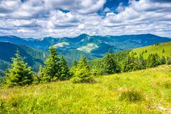 Spring landscape with grassy meadows and mountains royalty free stock image
