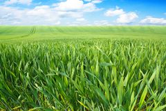 Spring landscape with green field Stock Photography
