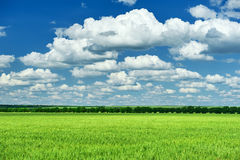 Spring landscape, green field and blue cloudy sky Stock Photos