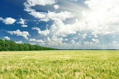 Spring landscape, green field and blue cloudy sky Stock Photography