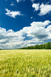 Spring landscape, green field and blue cloudy sky Royalty Free Stock Photo
