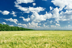 Spring landscape, green field and blue cloudy sky Stock Images