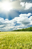 Spring landscape, green field and blue cloudy sky Royalty Free Stock Image