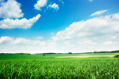 Spring Landscape with Green Field and Blue Sky Stock Images