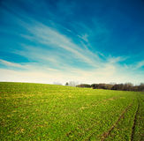 Spring Landscape with Green Field and Blue Sky Royalty Free Stock Photography