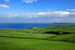 spring landscape - green field and ocean view Royalty Free Stock Photo