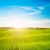 Spring Landscape with Green Field and at Sunset Royalty Free Stock Image