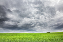 Spring landscape with green field and very dramatic sky Royalty Free Stock Photos