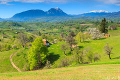 Spring landscape and green fields in Transylvania,Romania Stock Images