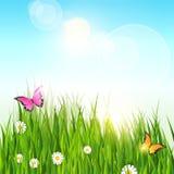 Spring Landscape Green Grass Blue Sky Land Banner. Flat Vector Illustration Royalty Free Stock Image