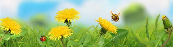 Spring landscape. Green grass and yellow dandelions. 3d vector panorama