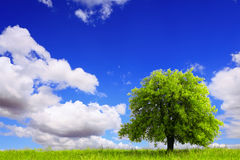 Spring landscape with green tree Stock Image
