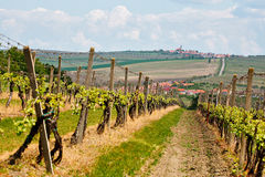 Spring landscape with green vineyards and town at background. Gr royalty free stock images