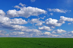 Spring landscape: green wheat field and blue sky with fluffy clouds. Beautiful background Royalty Free Stock Photo
