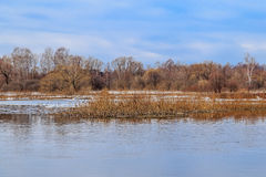 Spring landscape, high water on the river. Reeds, trees, remnants of ice Royalty Free Stock Image