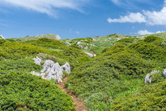 Spring landscape with hiking path Stock Images