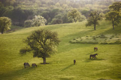 Spring landscape with horse at evening Royalty Free Stock Image
