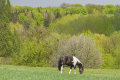 Spring landscape with horse Royalty Free Stock Photo
