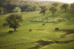 Spring landscape with horse and trees on meadow Royalty Free Stock Photo