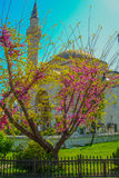 The Spring Landscape in Istanbul Stock Photo