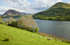 Spring landscape in Lake District National Park. Stock Photography