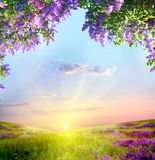 Spring landscape. With lilac tree Royalty Free Stock Photos
