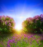 Spring landscape Royalty Free Stock Photo