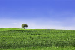 Spring landscape. With a lone tree on a hill Stock Photo