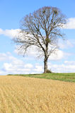 Spring landscape, lonely tree and blue sky, France Stock Images