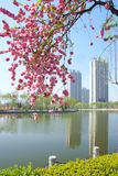 Spring landscape. The spring landscape of Longtan Park in Taiyuan, Shanxi, China Stock Images