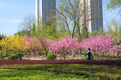 Spring landscape. The spring landscape of Longtan Park in Taiyuan, Shanxi, China Royalty Free Stock Images