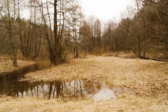 Spring landscape. With meadow flooded with water from melted snow and rain in the foreground and trees in the middle ground on the background of cloudy sky Stock Images