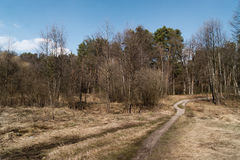 Spring landscape. Meadow and spring forest on background of blue sky Royalty Free Stock Images