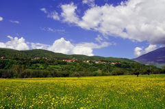 Spring landscape. Meadow full of flowers and blue sky Stock Image