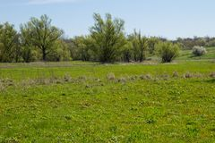 Spring landscape with meadow and trees Royalty Free Stock Photos